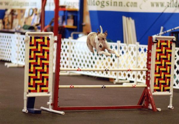 Wyatt jumping